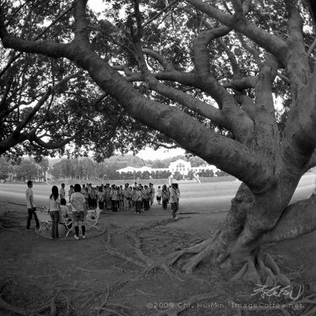 榕树下:黑白风景摄影20*20吋居家布置